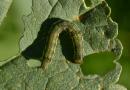 Como proteger sua lavoura de soja do ataque de pragas abaixo e acima do solo
