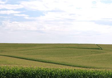 Modernização da lei de pesticidas traz eficiência e segurança para consumo
