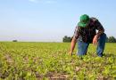 Produtores já podem ter acesso a novo programa de composição de dívidas rurais