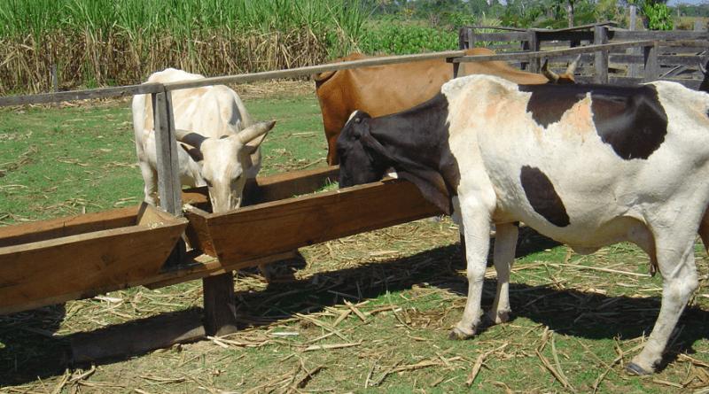 gado pecuaria pastagem