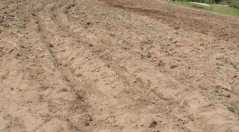 arenoso areia solo