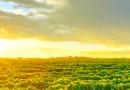 Aprovado crédito de US$ 195 milhões para o agro