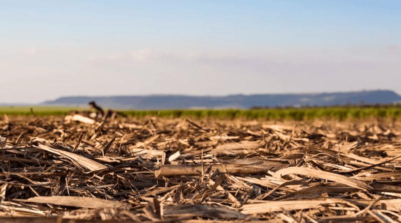 Uso da palha da cana para gerar bioenergia requer critérios, aponta estudo