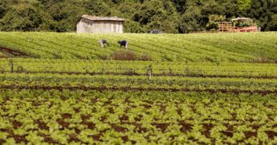 Bolsonaro assina reforma da Previdência; saiba como fica a aposentadoria rural