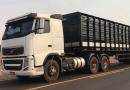 Nova altura para caminhões que transportam animais vivos