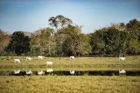 Área financiada pelo programa Agricultura de Baixo Carbono cresce 98% de Julho a Setembro