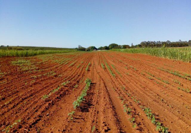 Estiagem no Sul: veja o que secretários da Agricultura propõem para amenizar a crise