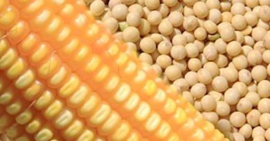 Venda soja e segure o milho: Entenda porquê