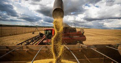Agropecuária é o único setor do PIB que registrou crescimento em 2020
